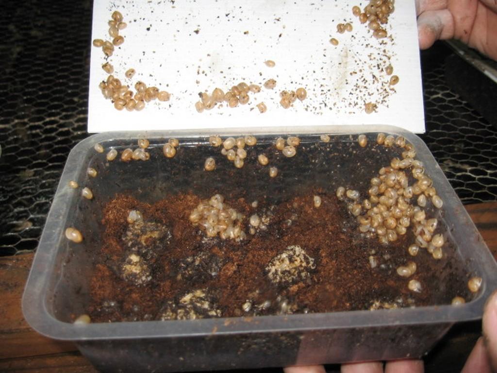 Les escargots du Mont Roty